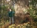 Image for Arlington Co. Champion of Regional Significance: Chestnut Oak