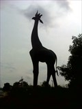 Image for Giraffe Statue - Dallas, TX