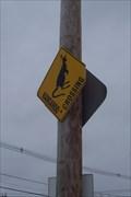 Image for Kangaroo Crossing in Massachusetts