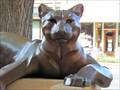 Image for Cougar - Loveland, CO