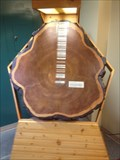 Image for North Bay Library Tree Growth Display