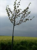 Image for Dedicated Trees-Appletree 'Jakob Fischer' - 96352 Effelter/Germany/BY