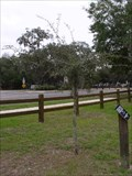 Image for 9/11 Memorial Tree - Keystone Heights Natural Park - Keystone Heights, FL
