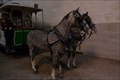 Image for Electric Car Museum Horses - Porto, Portugal