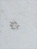Image for Los Gatos Creek Prints-  Campbell, CA