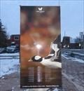 Image for Black and White Duck - Ottawa, Ontario