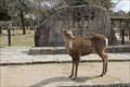 Image for Nara-koen Park (Todai-ji Temple) - Nara Japan