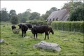Image for Lockeridge Dene, Wiltshire, UK