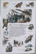 Image for Life Among the Redwoods - California
