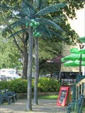 Image for Electric Palm Trees at Annies - Sainte-Anne-de-Bellevue, QC