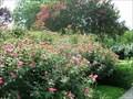 Image for The Carter Presidential Center Rose Garden-Atlanta, Georgia