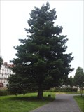 Image for Sequoia sempervirens - Nantes, France