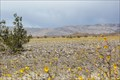 """Image for """"The 'super bloom': When Death Valley becomes 'a valley of life'"""" – Death Valley NP, CA"""