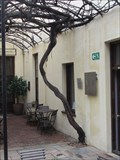 Image for OLDEST producing grape vine in Southern Hemisphere, Cape Town