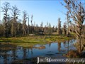 Image for Phinizy Swamp Nature Park - Augusta, GA