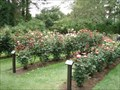 Image for Shore Acres All America Rose Garden - Coos Co., OR