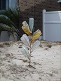 Image for Tiny Bottle Tree - American Beach, FL