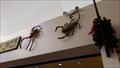 Image for Spiders and Scorpions - Santa Fe, NM