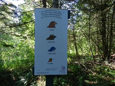 Panneau d'interprétation sur les oiseaux