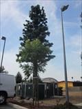 Image for Tennyson Tree - Hayward, CA