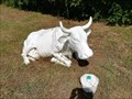 Image for white cow - Vigo, Pontevedra, Galicia, España