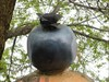 Photo gros plan du bleuet sur le boule de crème glacé.  Photo close-up of the blueberry ice cream ball.