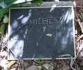 Image for Millie  -  Miami, FL