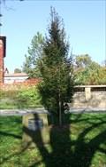 Image for The Tree of Friendship - Rakovnik