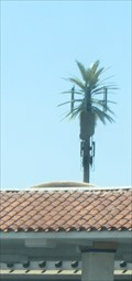 Image for 7-11 Palm Tree - Las Vegas, NV