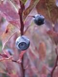 Image for Tonga Ridge Area Blueberries