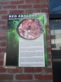 Image for Red Abalone  -  Monterey, CA
