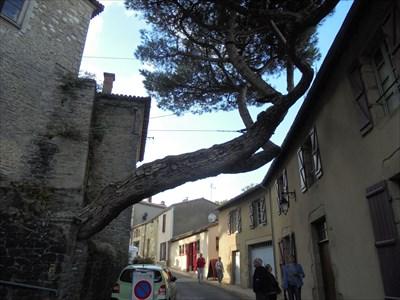 Une attitude inquiétante de cet arbre qui se dirige résolument vers la maison