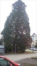 Image for Mammutbaum auf dem Parkplatz der VHS - Neuwied - RLP - Germany