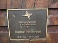 Image for Carmel Whitbread, West Kempsey, NSW, Australia