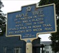 Image for Maple Tree - Newark Valley