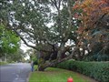 Image for The Sloan Tree - Oak Bay, BC