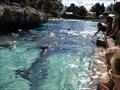Image for Feed the Dolphins - Sea World - Orlando, Florida, USA.
