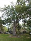 Image for Cora R. Franz - Jacksonville, FL