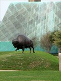 Image for American Bison - Corpus Chrisit, TX