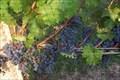 Image for Turdo Vineyards & Winery