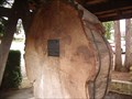 "Image for The ""Columbus"" Tree - Port Alberni, BC"