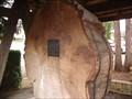 "Image for The ""Columbus"" Tree - Port Alberni, BC"