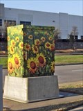 Image for Sunflowers - Flower Mound, TX
