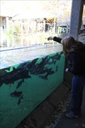 Image for Feed the Fish -- TX Freshwater Fisheries Ctr -- Athens TX