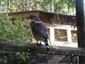 Image for Hawk Enclosure  -  Davie, FL