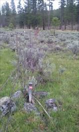 View of survey mark looking SW along fence line and towards Swan Lake Rd.