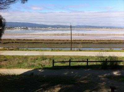 Salt Ponds, Looking North from Bedwell Bayfront Park-5, San Mateo Cnty, CA