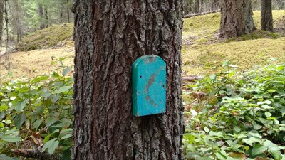 """A simple blue door on a tree. """"Where have all the Fairies gone? Long time passing."""""""