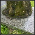 Image for Stone bench eating tree - Písek, Czech Republic