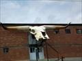 Image for Giant Steer Skull  - Bandera, TX